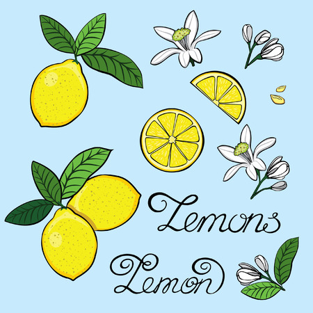 cartooning: Elements for the design of a lemon, lemon tree flowers, grain. Picture for scrapbooking. Painting leaves and twigs art for kitchen, wall art. Hand drawn font for your business, greetings cards, poster