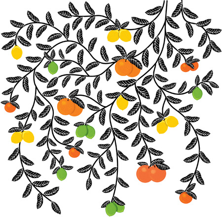 citrus tree: Hand drawn ornamental tree with leaves and citrus. Illustration for your business