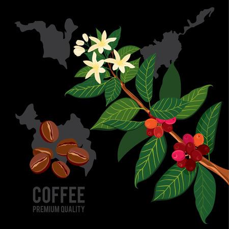 지도의 배경에 커피 지점입니다. 잎, 꽃, 장과, 과일, 씨를 가진 식물. 잘 익은 커피. 일러스트