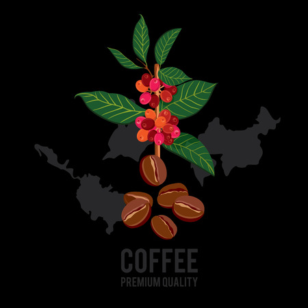 stimulant: Coffee branch. Plant with leaf, berry, fruit, seed. Ripe coffee. Natural drink caffeine. Vector colored illustration on black background for shop and poster design