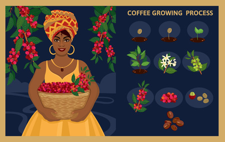 African woman with a basket of harvests Arabica coffee berries. Plant seed germination stages. Process of planting and growing a coffee tree. Coffee tree cultivation in stages. Vector illustration. Ilustrace