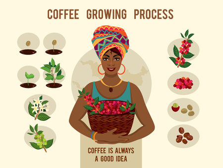 Poster with process of planting and growing a coffee tree. Beautiful woman is a coffee farmer with a basket of coffee berries.