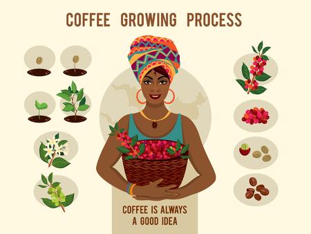 Cartaz com processo de plantio e crescimento de uma árvore de café. A mulher bonita é um fazendeiro de café com uma cesta de bagas de café.