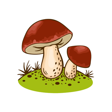 Wild cep Porcini Mushrooms on forest glade in cartoon still life. Vector Food illustration isolated on white background. Organic vegetarian product. Great for menu, label, product packaging, recipe