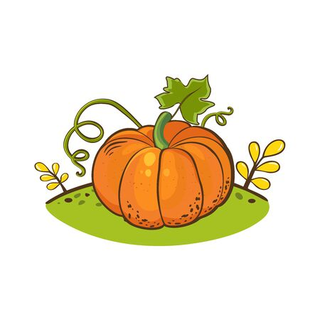 Orange pumpkin with green leaves and curly stems, vector illustration on a cartoon style. Autumn Halloween or Thanksgiving pumpkin, vegetable graphic icon or print, isolated.
