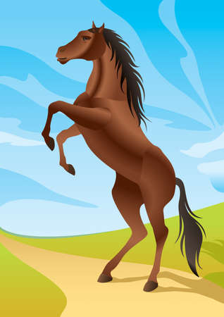 horseback riding: Wild horse in the fields illustration