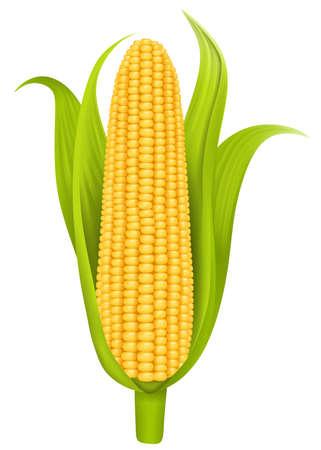 illustration d'épi de maïs isolé