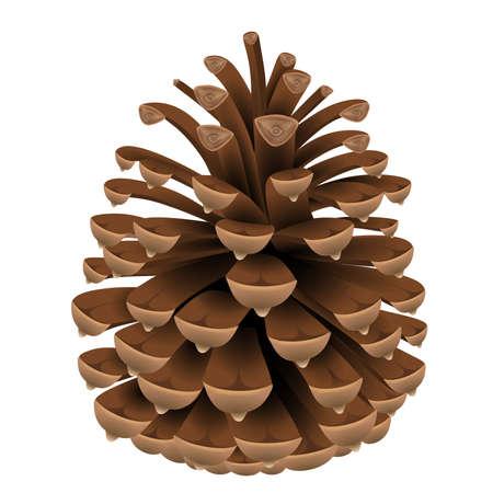 illustration de pomme de pin isolée Vecteurs