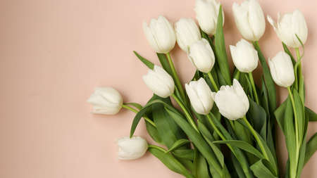 Bouquet of fresh spring white tulips lies on a light pastel background, Top view, Copy space 写真素材