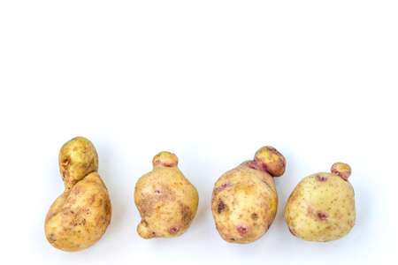 Ugly organic abnormal vegetables - potatoes, Space for text, Concept organic vegetables