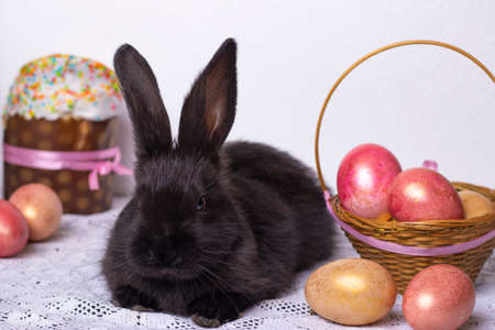 Little black bunny rabbit in the Easter composition with eggs and Easter cakes, the concept of a spring church holiday, horizontal photo, close-up Фото со стока