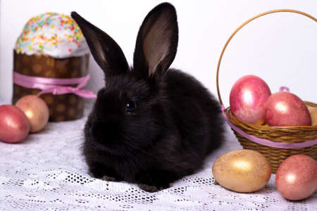 Little black rabbit in the Easter composition with eggs and Easter cakes, the concept of a spring church holiday, horizontal photo, close-up