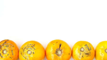 Trendy large ugly organic yellow tomatoes on a white background, Copy space, horizontal orientation
