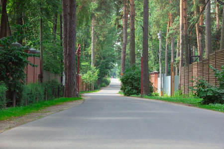 road and path through: path on the asphalt road through the green pine-trees