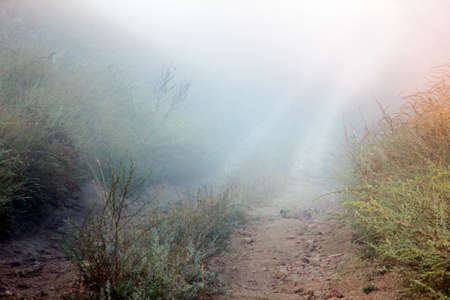 on forked: forked path leading through the green and yellow field at the end of which the fog