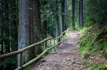fenced in: footpath fenced by a wooden fence in a pine forest