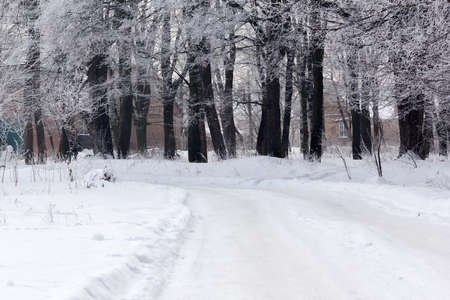 winter forest with a footpath and two houses Stock Photo