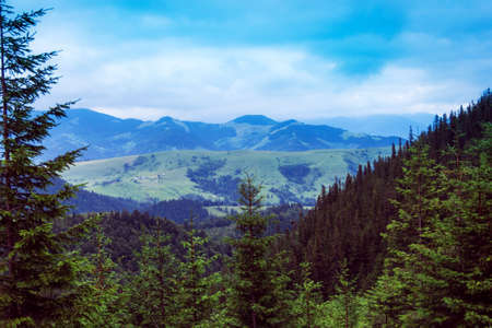 landscape of a Carpathians mountains with green trees and fir-trees on the foreground and grassy Stock Photo