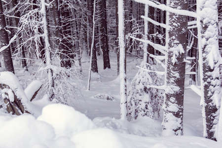 the forest is covered with white snow in winter
