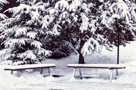 two benches are covered by snow among spruces in the park