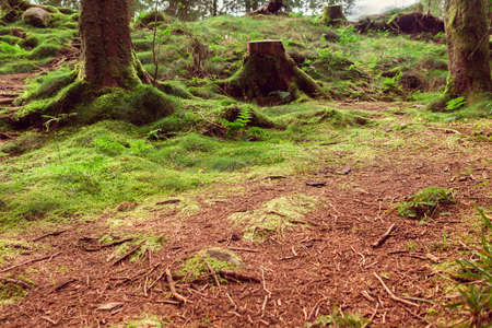 northern forest with green moss in Norway