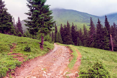 landscape consisting of a Carpathians mountains with footpath in the centre