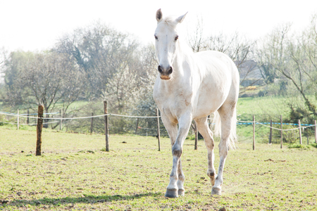 White Horse on a Bright Sunny Day in A Green Field