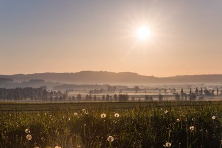 Sunrise over Dandelions and Countryside Fields with Dew Drops in Spring