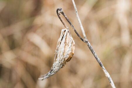 Dried Milkweed Seeds in Golden Winter Vegetation and Blurred Background Reklamní fotografie