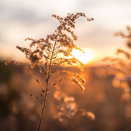 Dried Wild Grass and Country Fields with Winter Sunset in Blurred Background Banque d'images