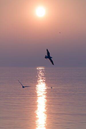Seagulls Flying over Shimmering Lake at Sunset 版權商用圖片