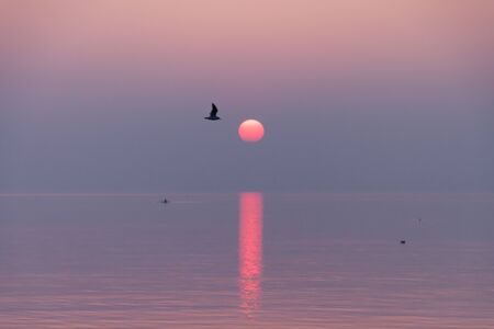 Seagulls Flying in Crimson and Purple Sunset Reflecting in Lake Leman