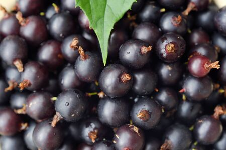 Delicious fresh black currants in the plate view Imagens