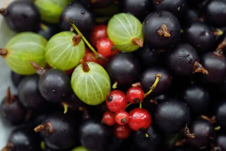 Plate with blackcurrants and gooseberries