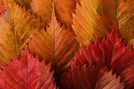 Bright yellow and red autumn leaves beautiful Foto de archivo