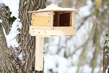 Wooden feeder on the tree for birds in the forest Stock Photo