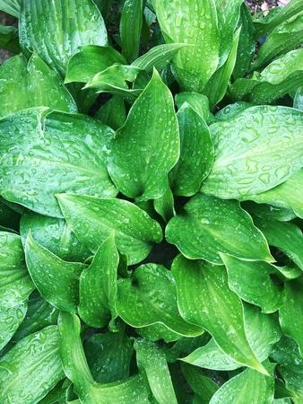 Schöner grüner Farn mit Tau im Garten