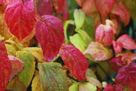 Beautiful plant with colorful leaves in the park