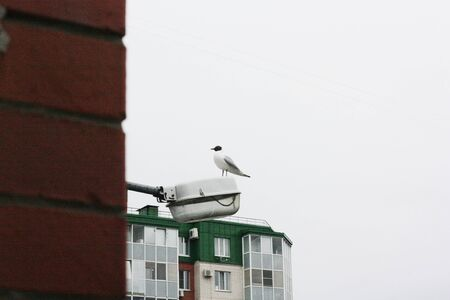 Beautiful white gull sits on a street lamp Banque d'images