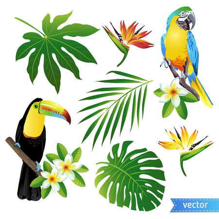 ready logos: Set of tropical flowers, leaves and birds. Toucan. Vector.