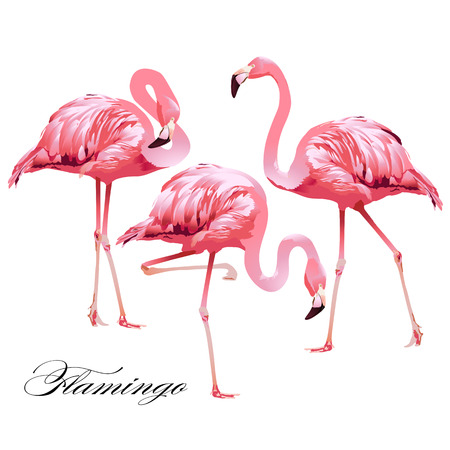 Flamencos tropicales del pájaro. Vector. Foto de archivo - 74903415