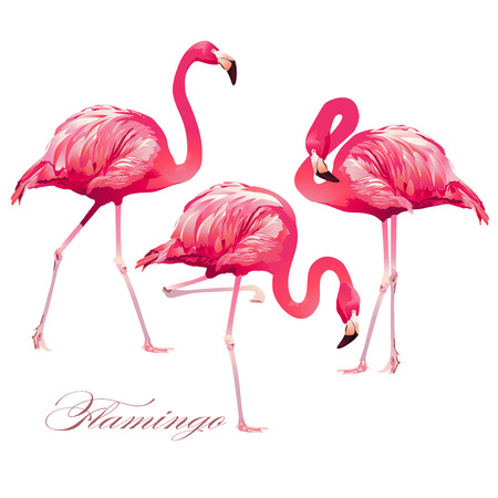 Tropical Bird Flamingos. Vector.