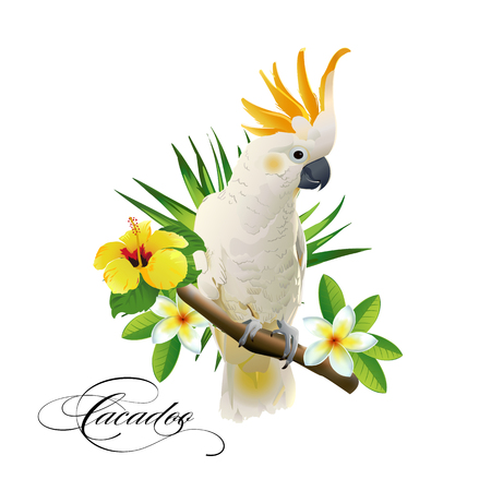 Parrot cockatoo on the tropical branches with leaves and flowers on white background. Vector illustration. Illustration