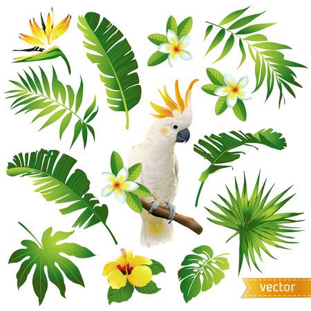 熱帯の葉のセット、花や鳥のベクトル イラスト。  イラスト・ベクター素材