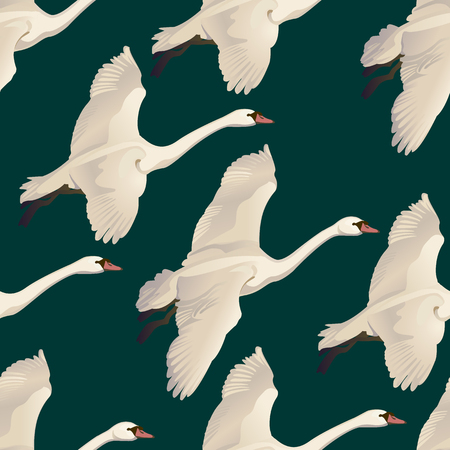 Vector illustration of Seamless pattern of drawing Flying Swans.