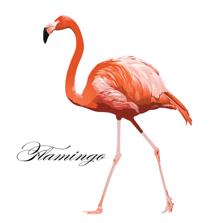 Flamingo tropical exotic coral bird Vector isolated Illustration. Çizim
