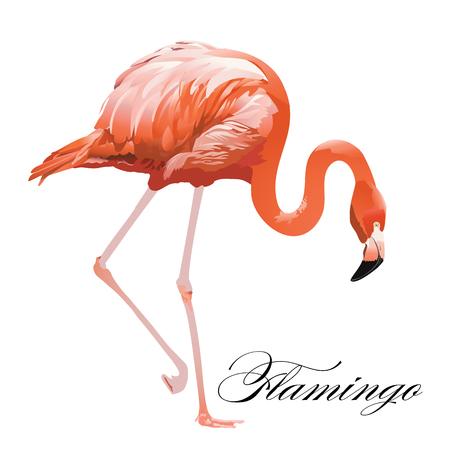 フラミンゴ熱帯エキゾチックなサンゴ鳥ベクトル図を分離しました。  イラスト・ベクター素材