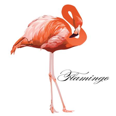 フラミンゴ熱帯エキゾチックなサンゴの鳥ベクトル孤立イラスト。