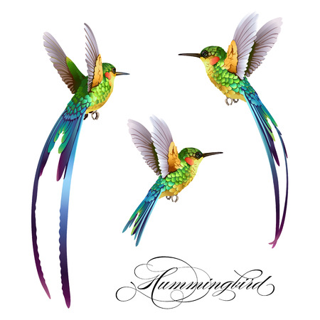 Hummingbirds set. Tropical seamless pattern with bird. Vector illustration.