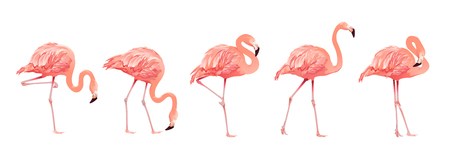 Pink Flamingo Bird Set Isolated on White Background. Vector illustration Banco de Imagens